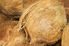 Organic coconuts at local market. Royalty Free Stock Photos