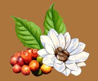 Organic Coffee. Graphic design of organic coffee Stock Illustration
