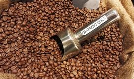 Organic coffee beans Royalty Free Stock Image
