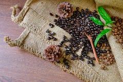 Organic coffee beans stock photo