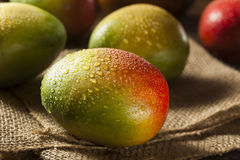 Organic Colorful Ripe Mangos Royalty Free Stock Images