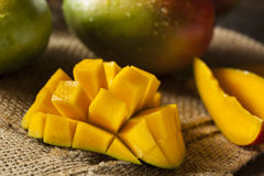 Organic Colorful Ripe Mangos Stock Photo