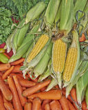 Organic corn cobs and carrots for sale Royalty Free Stock Images