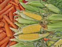 Organic corn cobs and carrots for sale Royalty Free Stock Photos