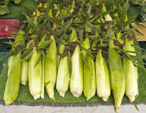 Organic corn at Farmers Market Royalty Free Stock Images
