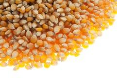 Organic corn Royalty Free Stock Photography