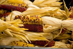 Organic Corn Royalty Free Stock Photos