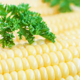 Organic corn and parsley Stock Image