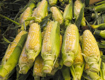 Organic Corn for sale at market Stock Photos