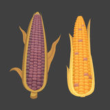 Organic Corn  on White Background. Agriculture farm vegetable for popcorn vector. Corncob with leafs vegeterian. Organic Corn  on White Background. Agriculture Royalty Free Stock Photos