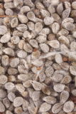 Organic Cotton seeds.background. Stock Photos
