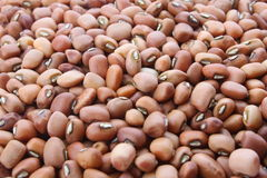 Organic cow peas Royalty Free Stock Photos