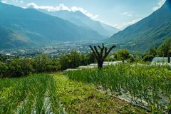 Organic crops in the mountain. Organic crops in the Saint-Jean-de-Maurienne mountains in France Royalty Free Stock Photo
