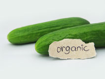 Organic Cucumbers. 2 cucumbers with organic written on the lable Stock Image