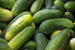 Organic cucumbers on the market, food background Royalty Free Stock Photos