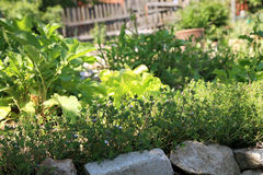 Organic cultivation of herbs and vegetables Stock Photo