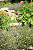 Organic cultivation of herbs and vegetables Stock Images