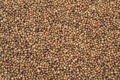 Organic Dried coriander seeds, Coriandrum sativum, closeup background texture.  stock photos