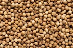Organic Dried coriander seeds Coriandrum sativum closeup background texture Royalty Free Stock Images