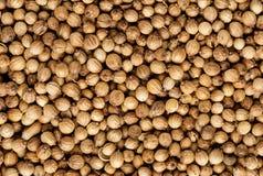 Organic Dried coriander seeds Coriandrum sativum closeup background texture.  royalty free stock photography