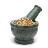 Organic Dried coriander seeds & x28;Coriandrum sativum& x29; on marble pestle. Royalty Free Stock Photo