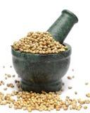 Organic Dried coriander seeds & x28;Coriandrum sativum& x29; on marble pestle. Stock Image