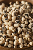 Organic Dry Black Eyed Peas Stock Photo