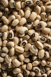 Organic Dry Black Eyed Peas Royalty Free Stock Images