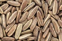Organic dry Gulmohar (Delonix regia) seeds. Royalty Free Stock Photography