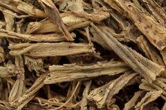 Organic dry hadjod (Cissus quadrangularis) stems. Royalty Free Stock Photography