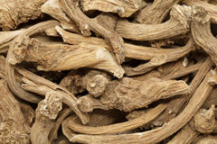 Organic dry Horseradish (Armoracia rusticana) roots. royalty free stock images