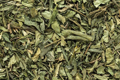 Organic dry Kalmegh or chiretta (Andrographis paniculata) leaves. Stock Photography