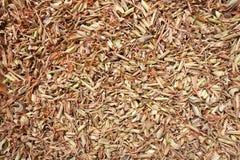 Organic dry lemongrass Cymbopogon flexuosus big cut. Macro close up background texture. Top view Royalty Free Stock Photo