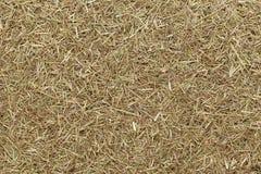Organic dry lemongrass (Cymbopogon flexuosus) fine cut. Macro close up background texture. Top view Stock Photography