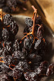 Organic Dry Raisins on the Vine Royalty Free Stock Photography