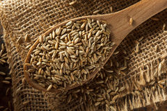 Organic Dry Raw Rye Grain Royalty Free Stock Images