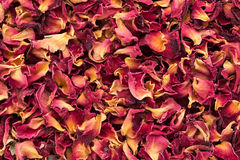Organic dry Rose Damask petals (Rosa damascena). Stock Photos