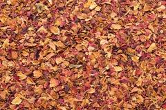 Organic dry rose petals (Rosa × centifolia). stock image