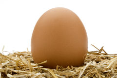 Organic Egg Royalty Free Stock Photos