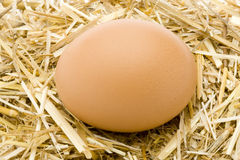 Organic Egg 2. Eggs organic natural food basket Stock Image