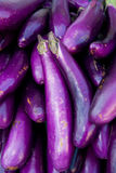 Organic Eggplant. At a farmer's market Stock Images