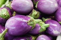 Organic Eggplant. At a farmer`s market stock photos