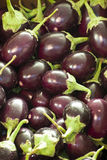 Organic Eggplants On Sale at Market Royalty Free Stock Photo
