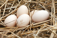 Organic eggs Stock Photos