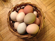 Organic Eggs in a Basket - Madison, Wisconsin. A basket of organic eggs in a basket from a farm in Madison, Wisconsin. Eggs are slightly different shapes and Stock Photography