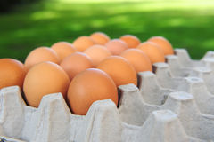 Organic eggs in carton Stock Photo
