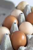 Organic eggs. A carton of organic home-grown eggs Stock Photography