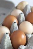 Organic eggs Stock Photography