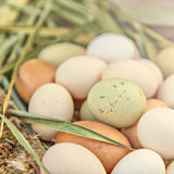 Organic eggs Royalty Free Stock Photos