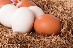 Organic Eggs in Nest Stock Photography